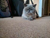 Schl?frige Katze stockbild