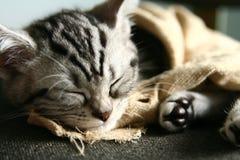 Schlaf Lizenzfreies Stockfoto
