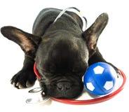 Schlaf der französischen Bulldogge Stockfoto