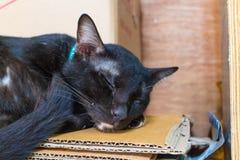 Schlaf der schwarzen Katze auf dem braunen Papier Stockfotografie