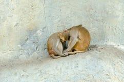 Schlaf mit zwei Affen Lizenzfreie Stockfotografie