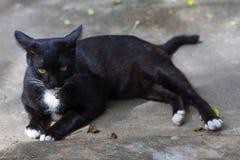 Schlaf und Blick der schwarzen Katze spielen auf dem Boden Lizenzfreie Stockbilder