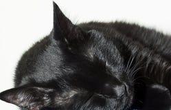 Schlafen der schwarzen Katze Stockfotos