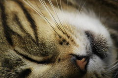 Schlafen katzenartig stockfotos