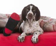 Schlafen mit dem Hund lizenzfreie stockfotografie