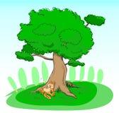 Schlafen unter dem Baum Lizenzfreie Stockfotos