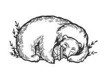 Schlafenbärnstich-Vektorillustration lizenzfreie abbildung