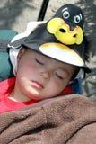 Schlafend am Zoo. Lizenzfreie Stockbilder