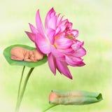 Schlafende Babys in der Lotosblume Stockfotos