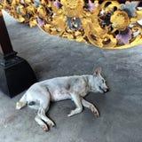 Schlafende Hunde soll man nicht wecken Stockfotos