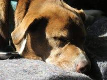 Schlafende Hunde soll man nicht wecken Lizenzfreies Stockbild