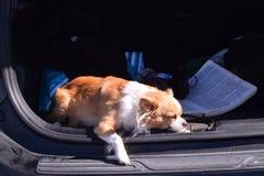 Schlafende Hunde soll man nicht wecken Stockbilder