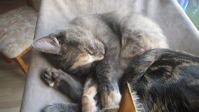 Schlafende Zeit Stockfotos