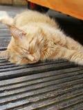 Schlafender Ginger Cat Lizenzfreie Stockfotos