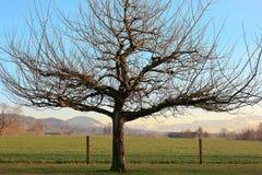 Schlafender Winter-Baum Lizenzfreie Stockfotografie