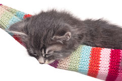 Schlafendes Kätzchen Stockbild