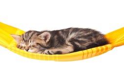Schlafendes Kätzchen Stockbilder