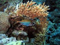 Schlafenfische Lizenzfreie Stockbilder