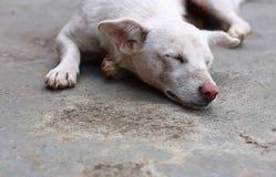 Schlafenhund Lizenzfreies Stockbild