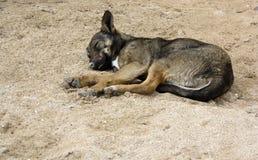 Schlafenhund Lizenzfreie Stockfotos
