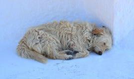 Schlafenhund Lizenzfreies Stockfoto