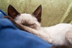 Schlafenkätzchen Stockbild