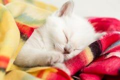 Schlafenkätzchen Stockfoto