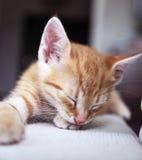 Schlafenkätzchen Lizenzfreie Stockbilder