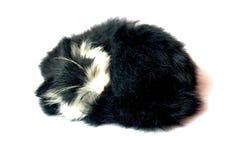 Schlafenkatze Lizenzfreie Stockfotos