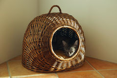 Schlafenkatze stockfotos