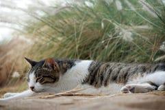 Schlafenkatze Stockbilder