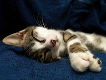 Schlafenkatze lizenzfreies stockbild