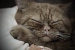 Schlafenkatze Stockbild