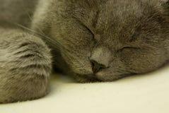 Schlafenkatze Lizenzfreies Stockfoto