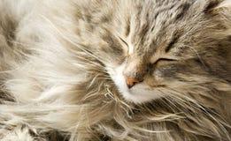 Schlafenkatze Stockfoto