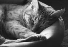 Schlafenkatze Stockfotografie