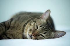 Schlafenkatze auf dem Bett Stockfoto