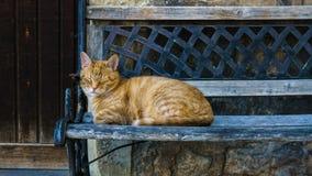 Schlafenkatze auf einer Bank Stockfotografie