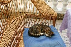 Schlafenkatze auf Kissen im Stuhl Stockfotos