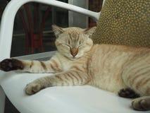 Schlafenkatze auf weißem Stuhl Stockbild