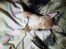 Schlafenkatze in einem Bett lizenzfreie stockbilder