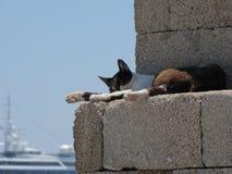 Schlafenkatze in einer Hafenwand stockfotografie