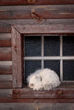 Schlafenkatze am Fenster Stockfotografie