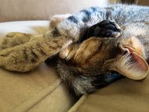 Schlafenkatze gekräuselt auf Lehnsessel stockfoto