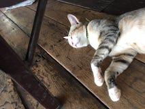 Schlafenkatze unter der Tabelle Lizenzfreie Stockfotografie