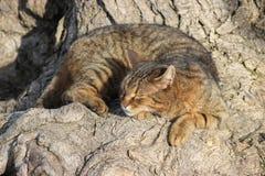 Schlafenkatze unter einem Baum Stockbilder