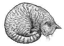 Schlafenkatzenillustration, Zeichnung, Stich, Tinte, Linie Kunst, Vektor Stockfotos