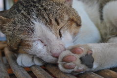 Schlafenkatzennahaufnahme Lizenzfreie Stockfotografie