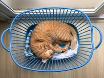 Schlafenkatzenorange im blauen Korb stockfotografie