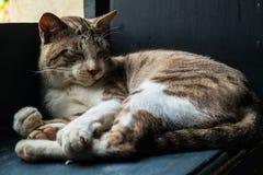 Schlafenkatzenporträt Lizenzfreies Stockbild